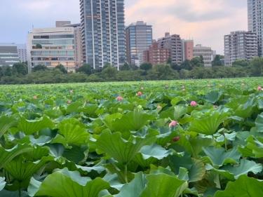 上野公園_01